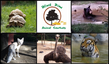 10 Reasons Why the Black Pine Animal Sanctuary Is Not Your Usual Zoo- It Goes Beyond!